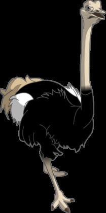 страус 002