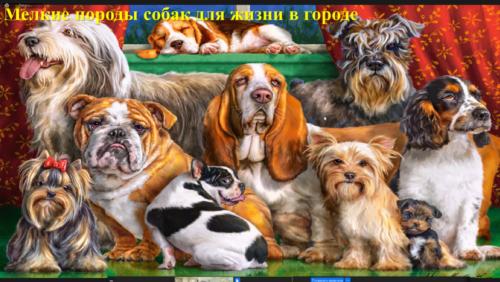 Московское долголетие_11-06-2021_четвероногое счастье