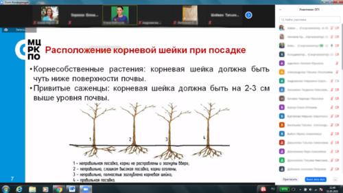 Московское долголетие-14-05-2021-декаративное садоводство